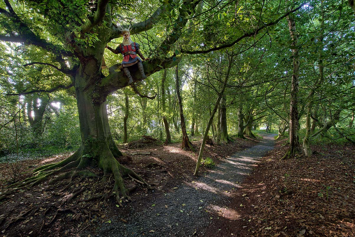 Woodland walk, Lullymore heritage and discovery park, Co Kildare_master