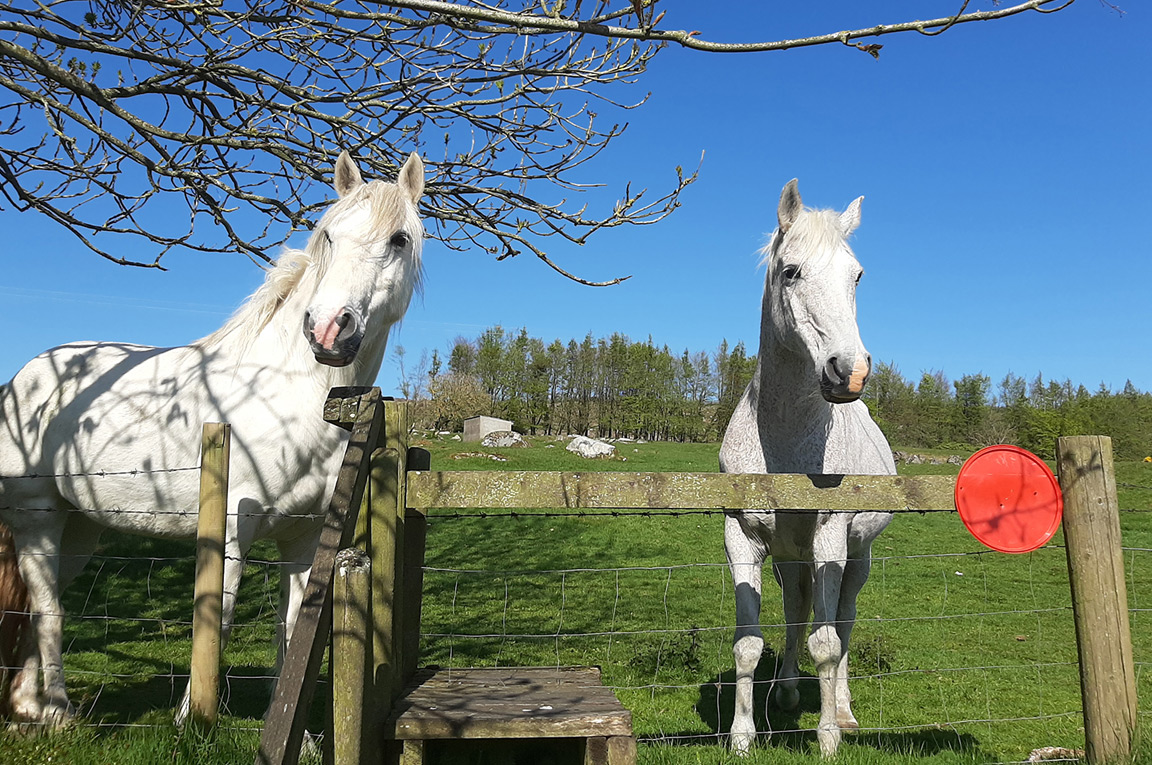 Two horses on a farm at Abhainn Ri