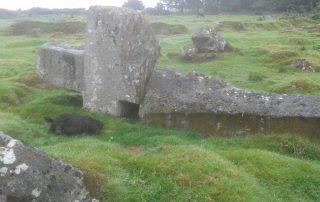 Cow outside of the Abhainn Ri