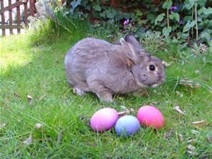 Easter Getaway Farm Stay in Wicklow